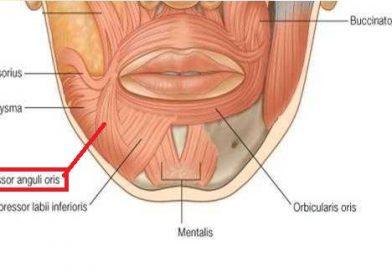 Depressor Anguli Oris Kası Nedir? Vücutta Nerededir?
